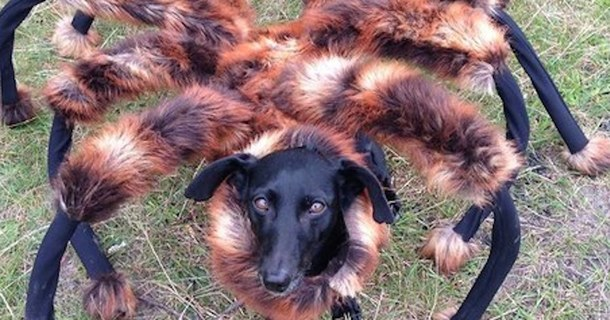 Giant Mutant Spider Dog Terrorizes Citizens, Hilarity Spreads